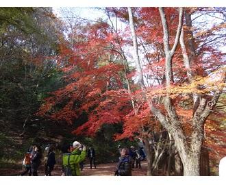 森林植物園のお仕事②