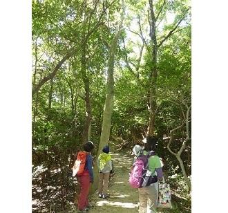 新春の須磨・鉢伏山の植物を楽しむ