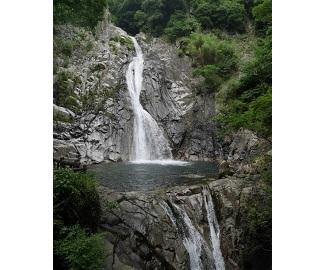 納涼の布引と大龍寺の照葉樹林を観察2