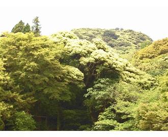 納涼の布引と大龍寺の照葉樹林を観察3