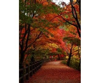 森林もみじ散策