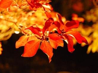 夜の紅葉散策&ザ・ナイトミュージアム1