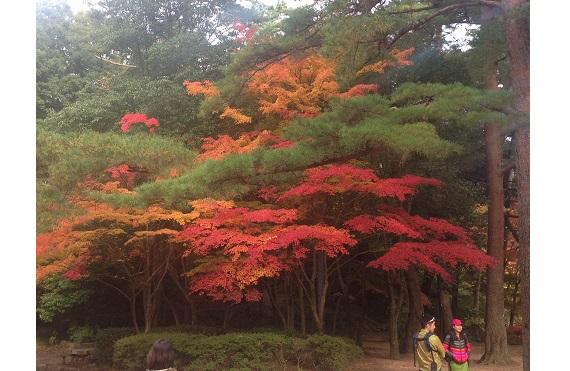 捨てたものじゃない 六甲の紅葉と自然を楽しむハイキング1