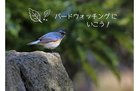 wbsjhyogo20171210nunobiki - コピー (2)6
