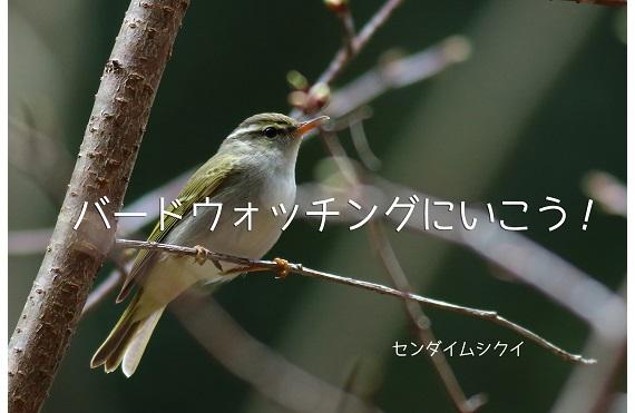 夏鳥たちとの再会 探鳥会