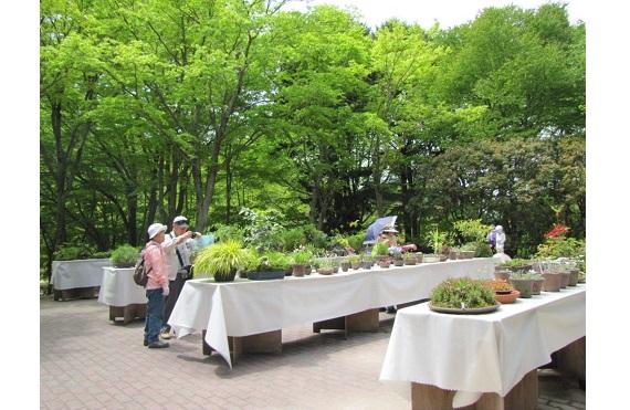 初夏の高山植物展