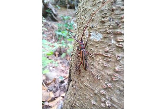 摩耶の森7昆虫