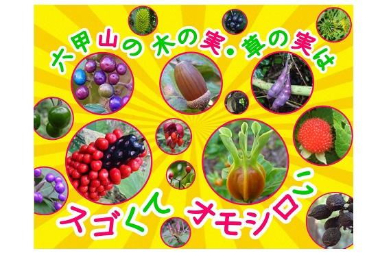 画像(六甲山の木の実・草の実)2020.02