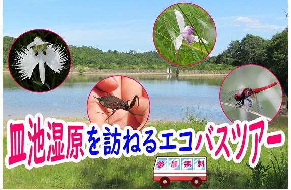 【画像】皿池湿原を訪ねるエコバスツアー2020.7